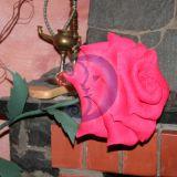 Nevystanti rožė