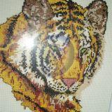 tigras1