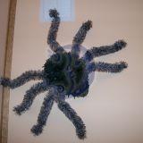 super dydzio voras