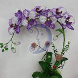 Orchidėja 2