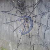 Voras ir voratinklis