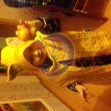 Kepure lapiukas