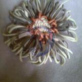 Žalsva chrizantema
